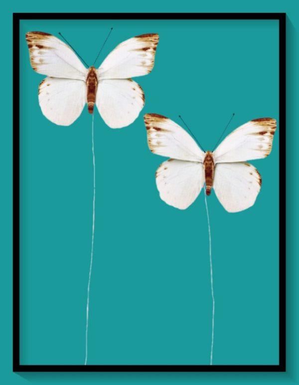 Διακοσμητικές Πεταλούδες 3864025
