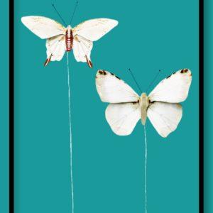 Διακοσμητικές Πεταλούδες 3864027