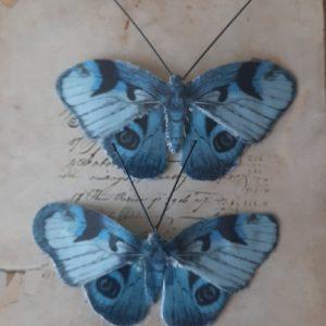Διακοσμητικές Πεταλούδες 3864035
